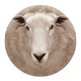 Craigco Sheep Jetters | Quality Equipment Since 1992